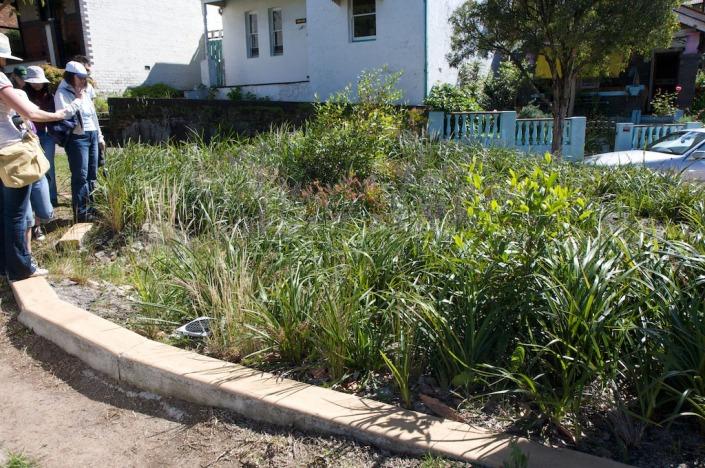 Hill Street rain garden