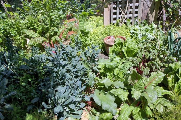 A small garden, lush and verdant