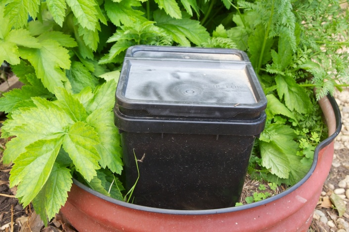 "A ""Little Rotter"" in-ground compost bin, in one of our garden beds"