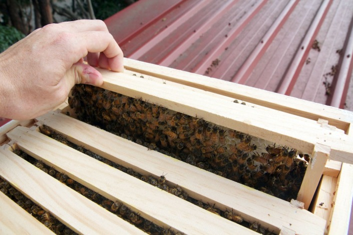 The bees are already laying down comb.