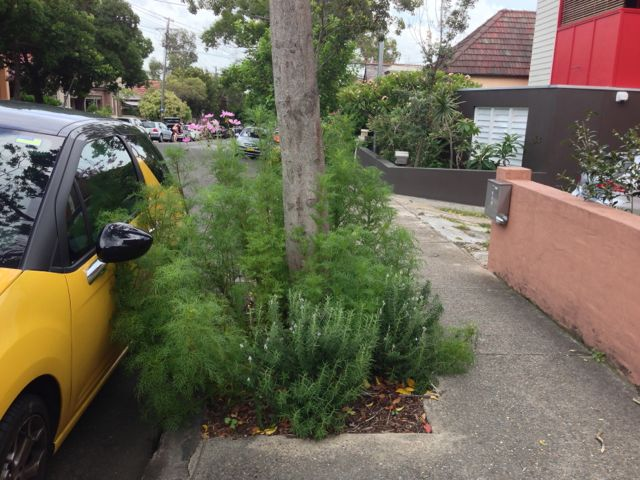 Gardening around the base of street trees -- have residents been leading the way?