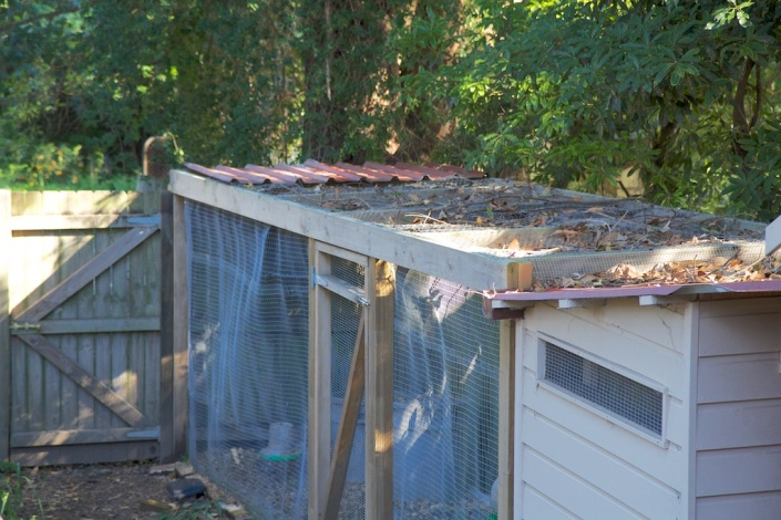 The corrugated iron that previously covered the end of the chicken run.