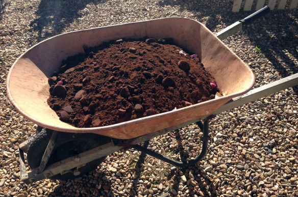 A wheelbarrow full of coffee.