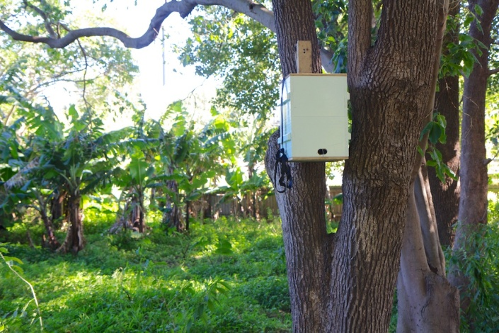 My first 'bait hive', hung in a tree behind the old convent next door.