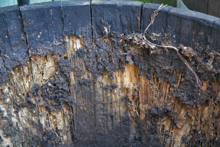 Wine barrels make a great meal for termites.