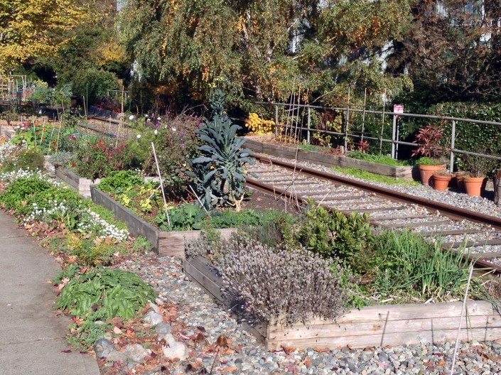 Community garden alongside disused railway tracks, south of the CBD.