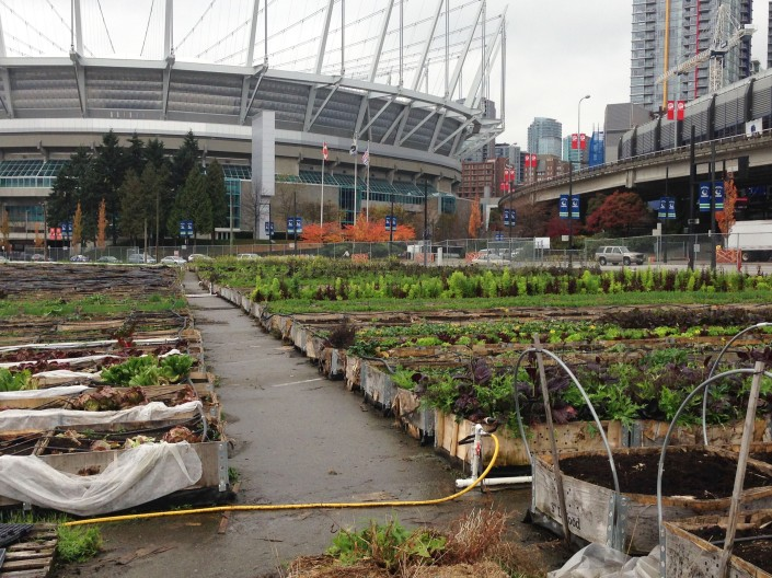 Large scale urban agriculture, right at the foot of the huge stadium.