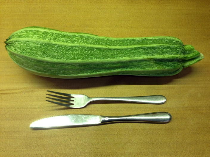 Heirloom zucchini, huge but still tasty!