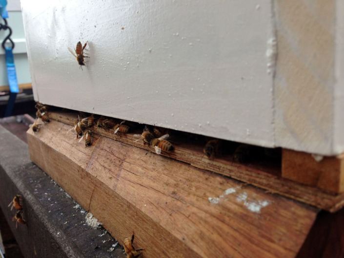 Our new bees, busy already!