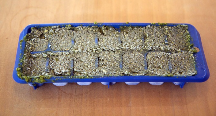 Yes, that's an ice cube tray full of pesto :-)