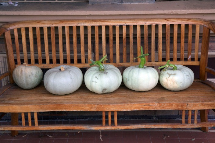 Five pumpkins in a row...