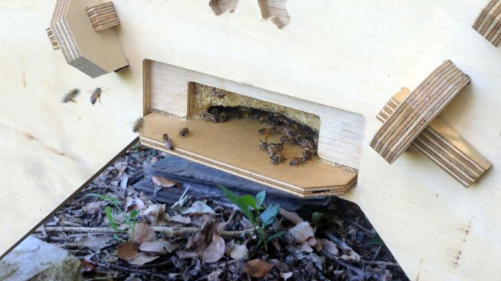Bees flying into the new hive.