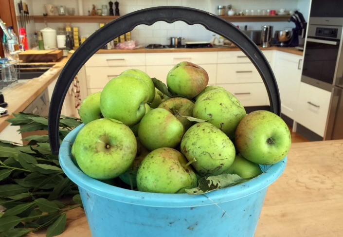 A full bucket of apples, ready for a wash -- and then eating!