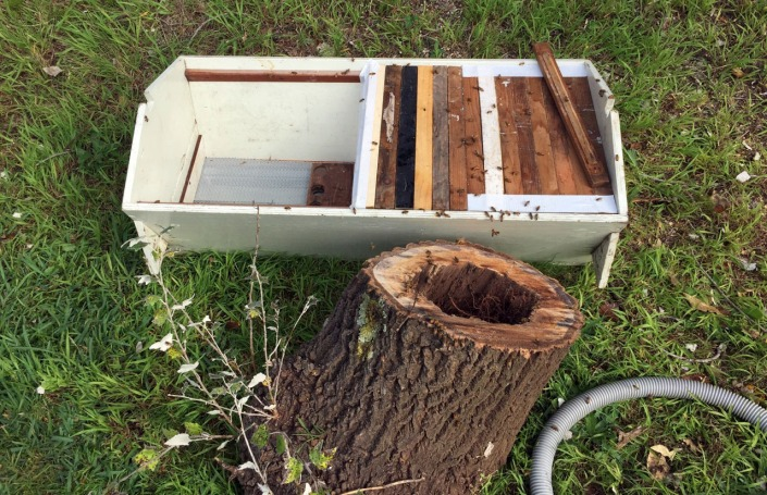 The bees transferred into a new hive.