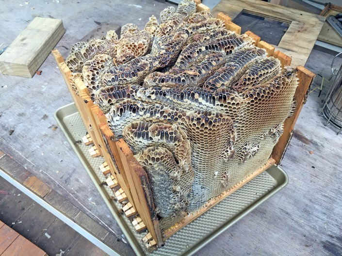 Extracting the honeycomb as one big cake...