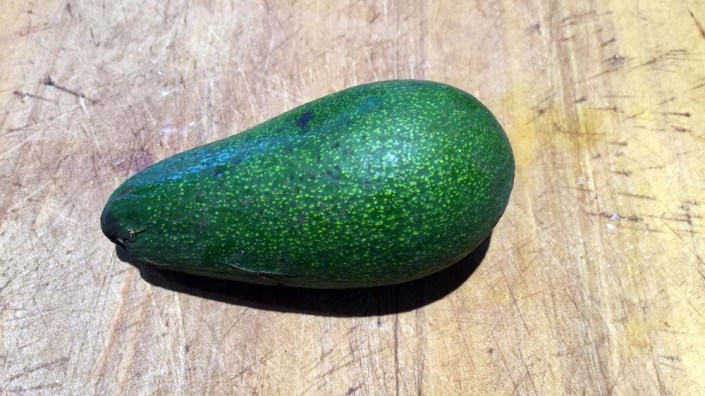 Our first (and only!) avocado