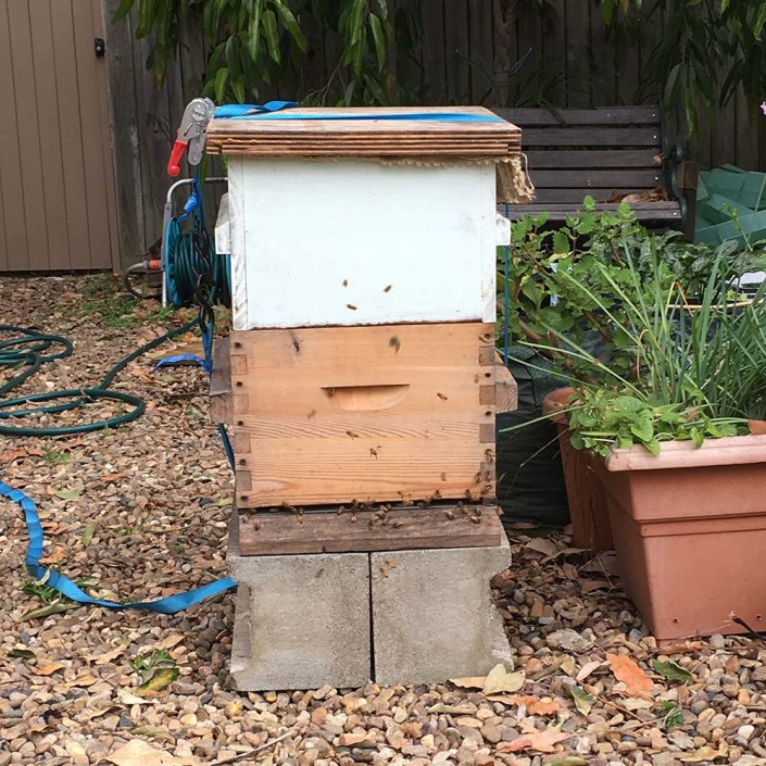 The bees in their new home, temporarily sitting in our front garden