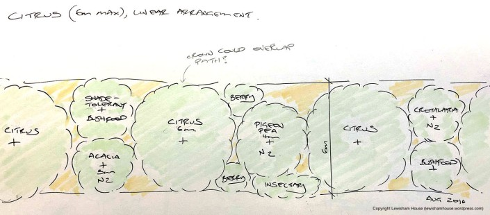 Linear arrangement of citrus guild (version 1.0)