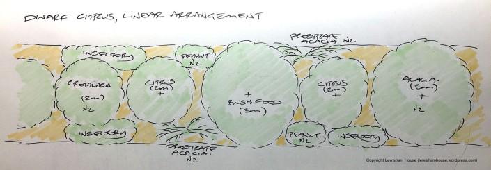 Linear arrangement of dwarf citrus (version 1.0)